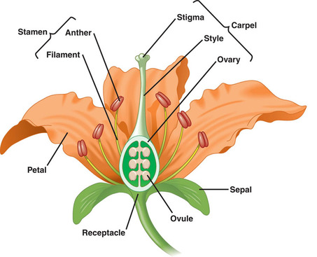 Explain asexual plant reproduction